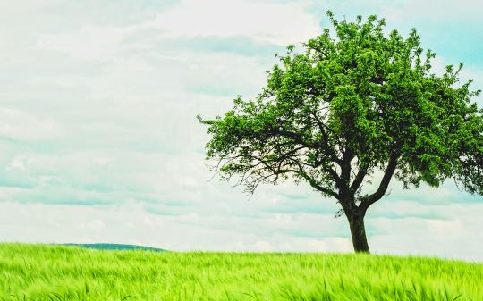 더불어 살아가는 생명, 나무 곁에 머물러야 할 때